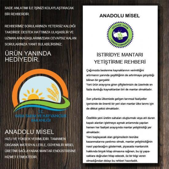 İstiridye Mantarı Tohumu 1 kg Hk35 Yeni Mahsul ( Ekim Poşeti +  Rehber Hediyeli )