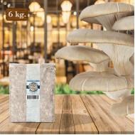 İstiridye Mantarı Tohumu 6 kg Hk35 Yeni Mahsul ( Rehber Hediyeli )