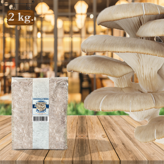 İstiridye Mantarı Tohumu 2 kg Hk35 Yeni Mahsul Ekim Poşeti + ( Rehber Hediyeli )